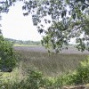 Beautiful Marsh Views Available